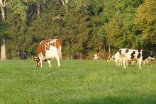 Op weg naar een natuurinclusieve landbouw
