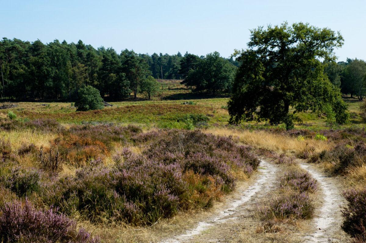 Staatsbosbeheer komt met herstelplan voor De Meinweg